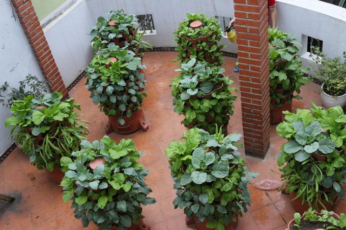 Mô hình tháp trồng rau hữu cơ Eco tại Đại La